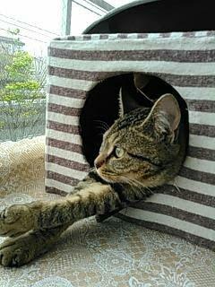 外眺める猫