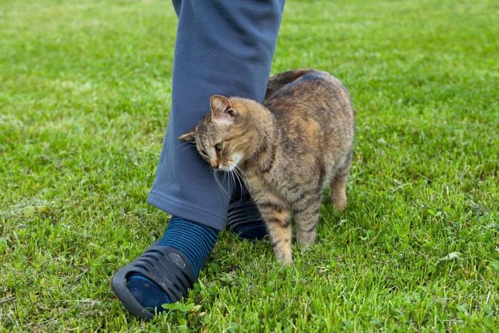 緑の中で人間の足にスリスリしている猫