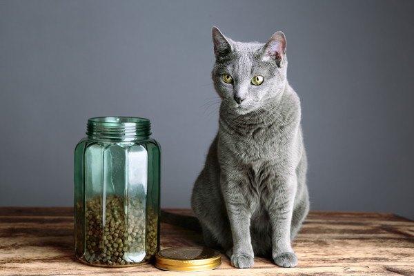 キャットフードの入った瓶と、その横に座る猫
