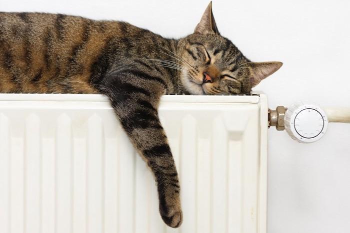 ヒーターの上で寝ている猫