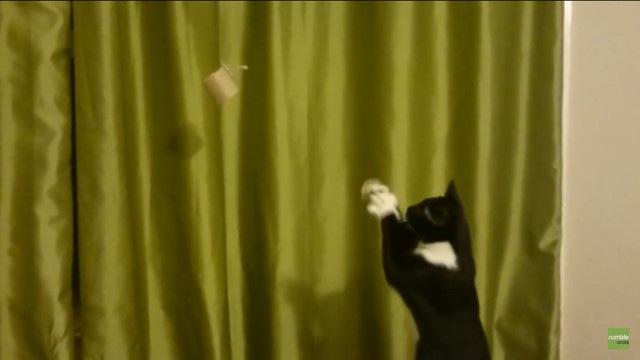 トイレットペーパーを掴みたい猫
