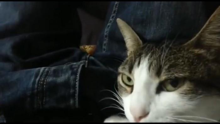 飼い主見つめる猫