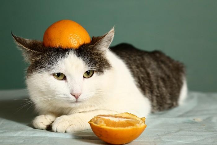 オレンジを乗せている猫