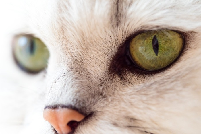 黄色の猫の目