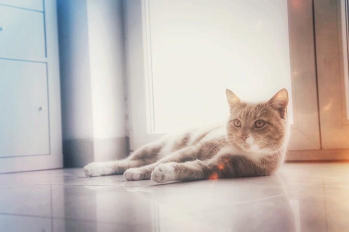 暑そうな猫