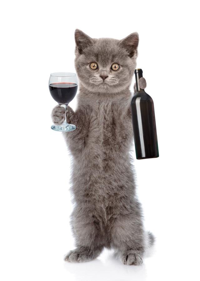 ワインと子猫