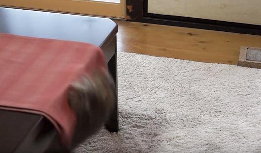 テーブルランナーと共に滑り落ちる子猫
