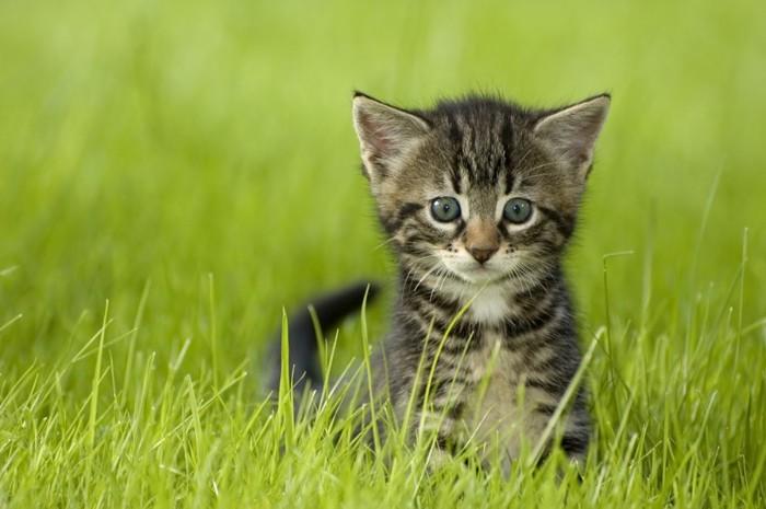草むらから見ている猫