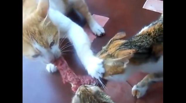 向かって右の猫の顔を押さえる猫