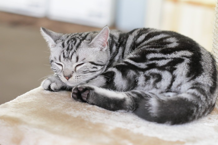 横座りする子猫の写真