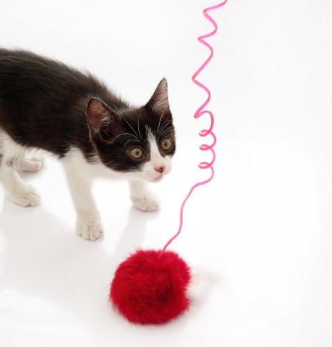 おもちゃの前で丸い目をする猫