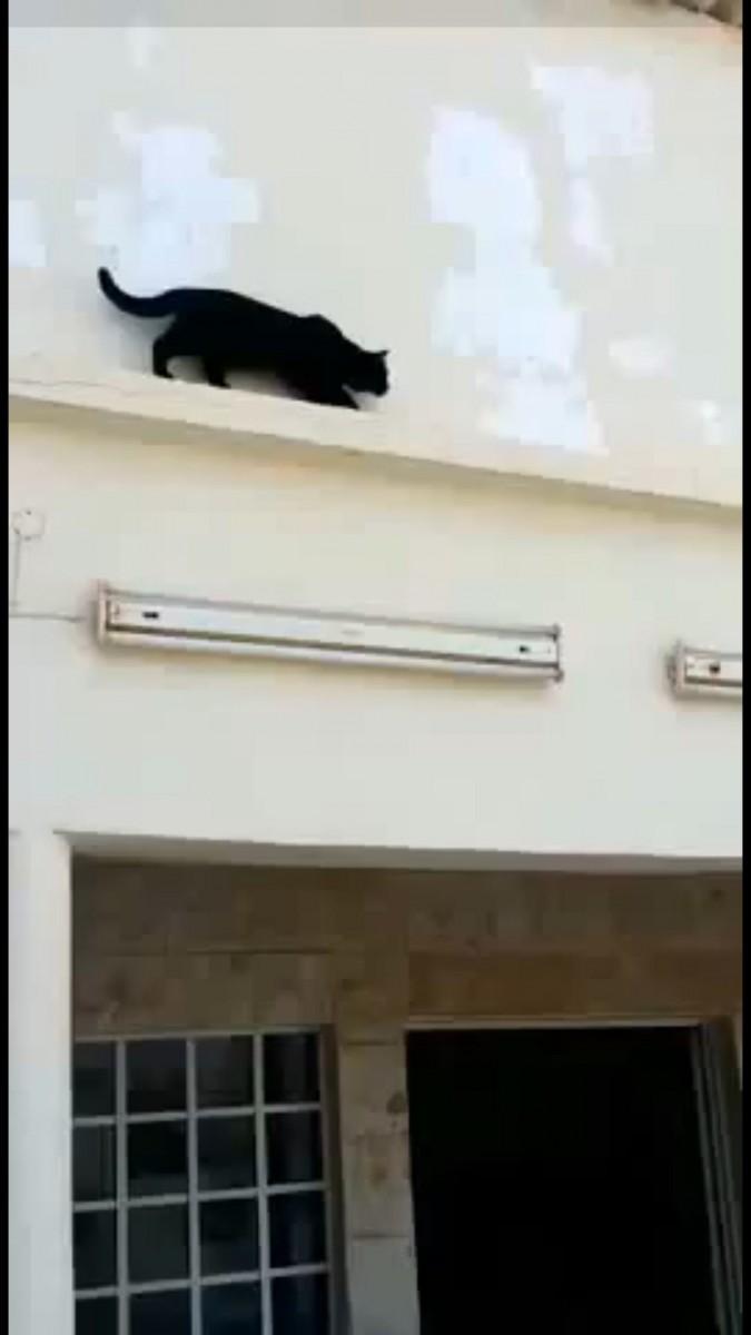 なにかを狙う猫