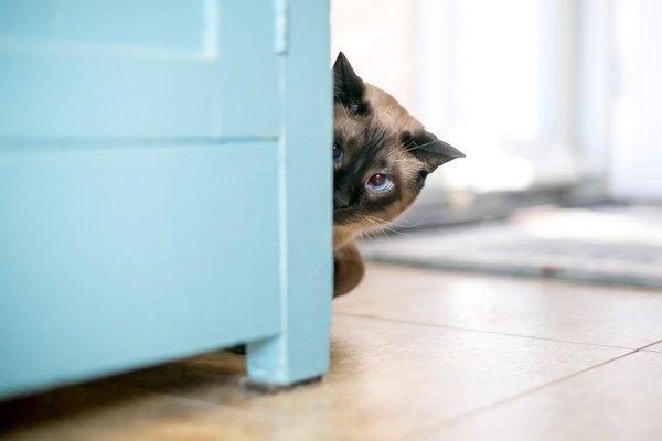 棚から見つめる猫