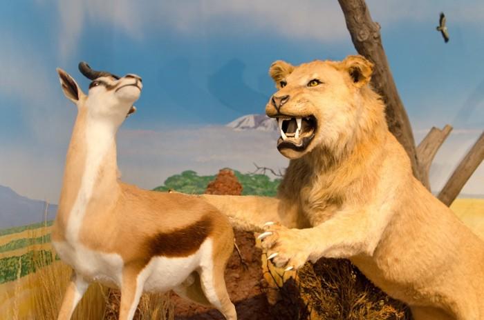 ライオンのはく製