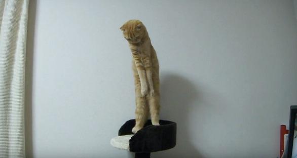 真っ直ぐに伸びる猫