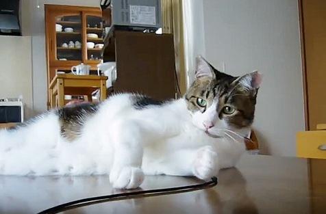 足元にある髪ゴムに気が付く猫