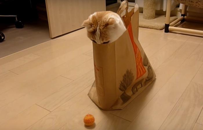 紙袋に入った猫とボール