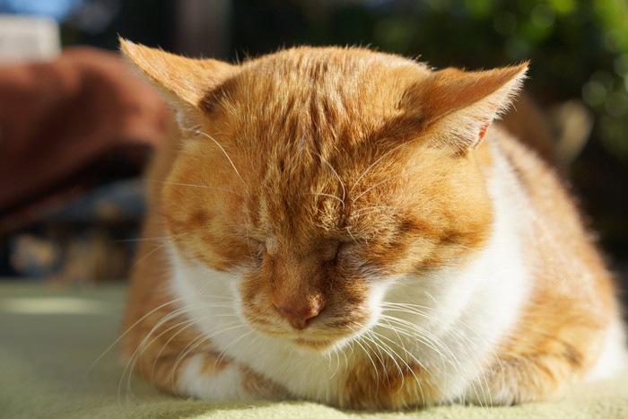 寝てる茶猫