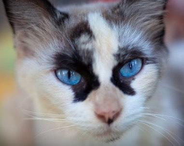 珍しい柄猫11