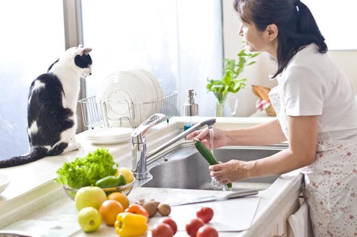 キッチンにいる女性と猫