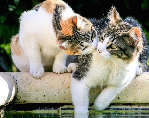 寄り添ってくつろぐ二匹の猫