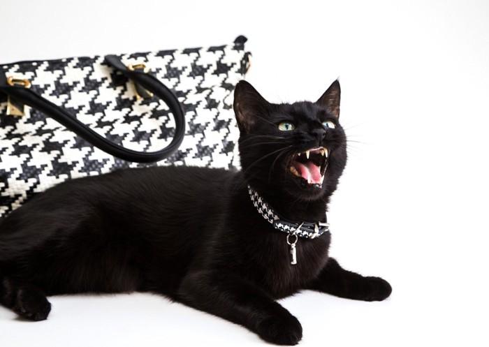 チドリ柄の鞄と黒猫