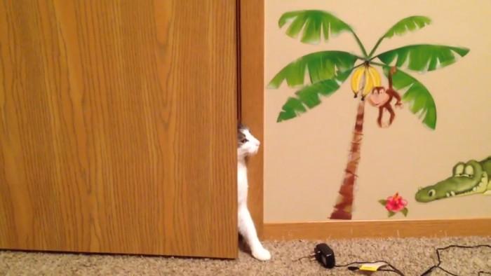 準備万端な猫