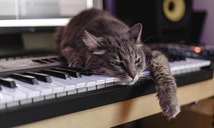 ピアノの上で眠っている猫