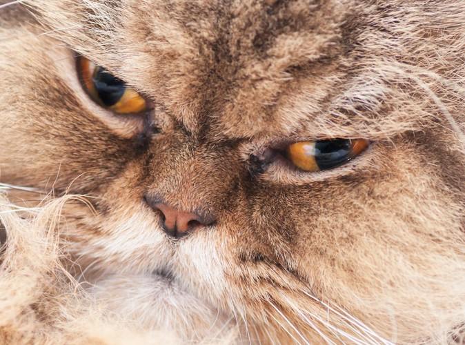 怒ったような表情の猫の顔アップ
