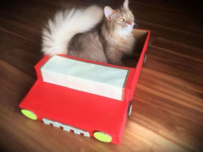 オープンカー風ダンボールハウスに入った猫