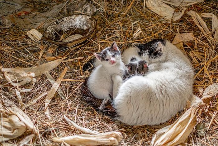 草むらで子猫の世話をする母猫