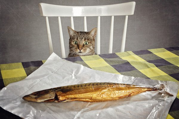 焼き魚をじっとみる猫
