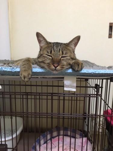 ゲージの上の猫