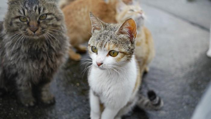 ご飯をねだるたくさんの青島の野良猫