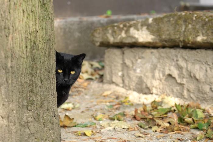 木の陰からこちらを見る猫