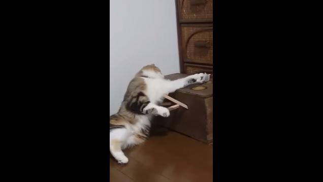 グレーのハムスターに手を伸ばす猫