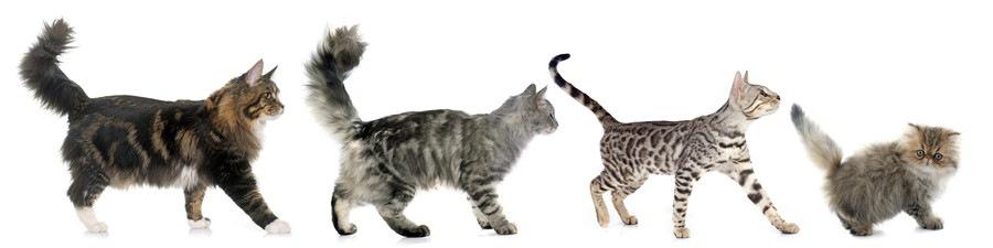 しっぽを立てて並んでいる猫たち