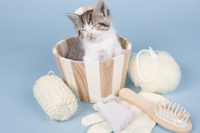 お風呂セットと寝る猫