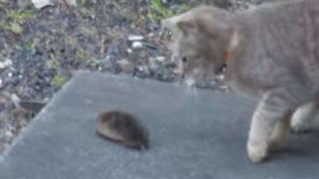 逃げるモグラと見つめる猫