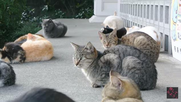 たくさんの猫(カメラの方を向いている猫2匹)