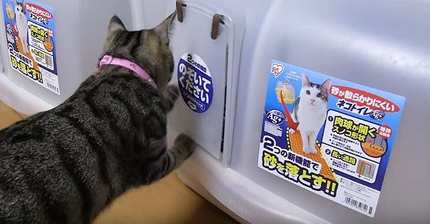 猫用トイレのドアを足で触る猫