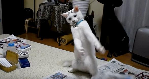 ラッパーのようなポーズを取る猫