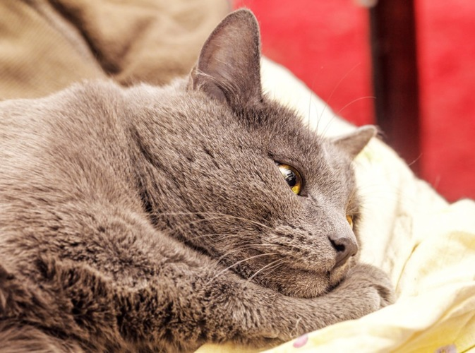 叱られてしょんぼりする猫