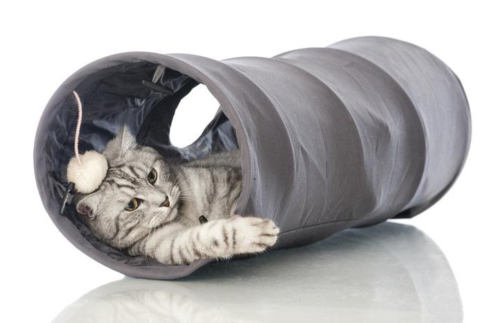 グレーのトンネルでくつろぐ猫