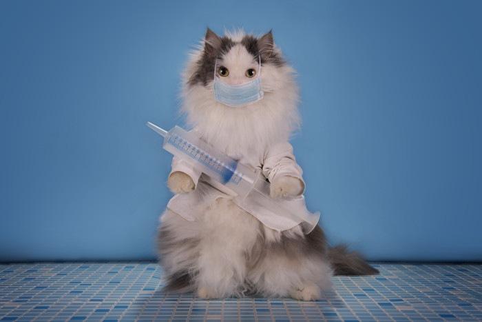 注射器を持った猫