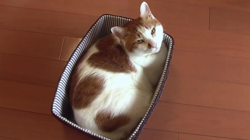 箱に入ってカメラを見上げる猫