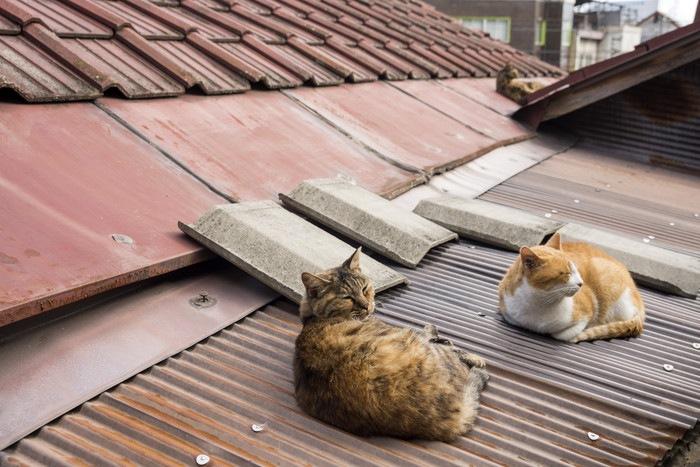 屋根の上で香箱座りの猫