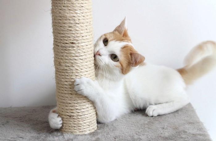 伽とタワーで遊ぶ猫