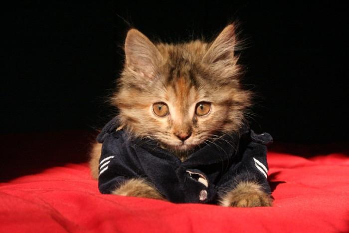 猫のお巡りさん