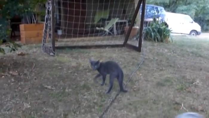 ゴールと猫